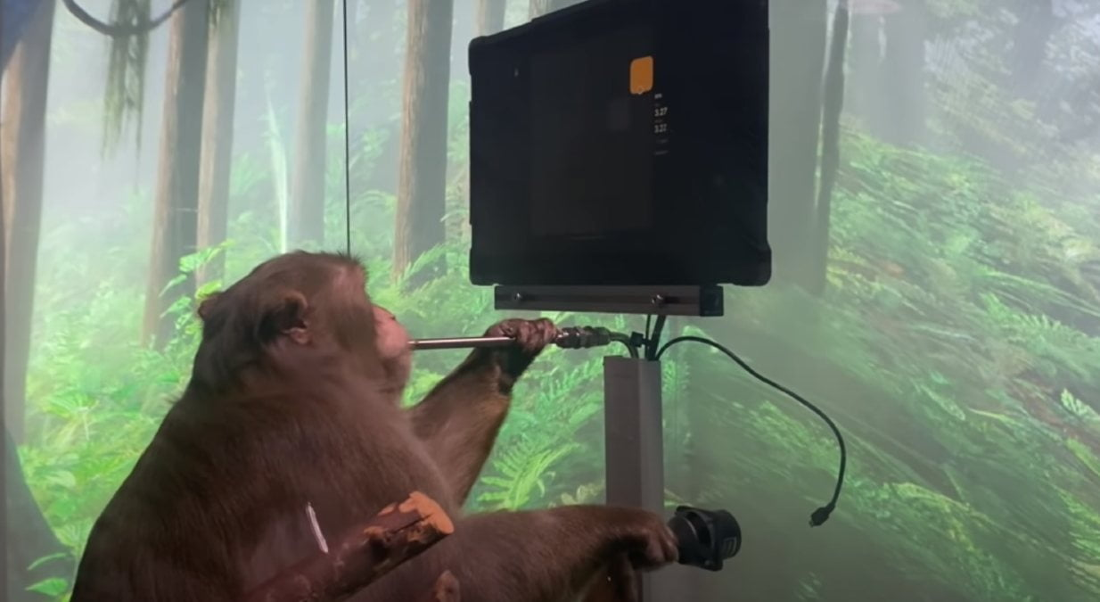 Mono juega a un videojuego con la mente