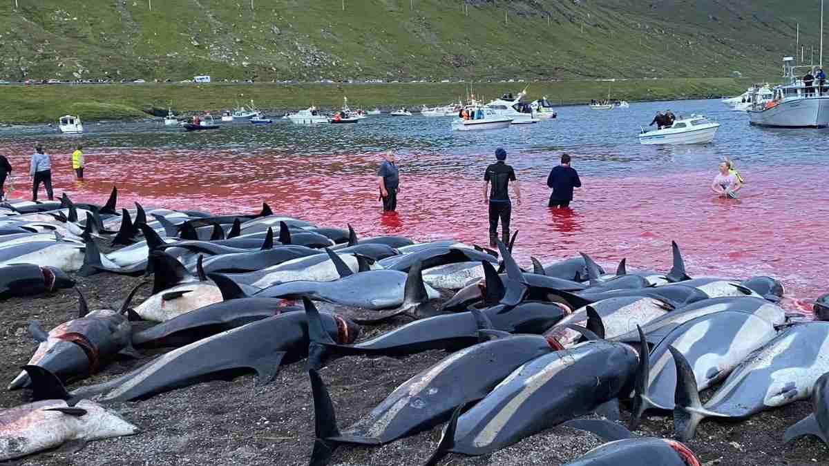 Matanza de delfines